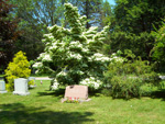Special Plantings